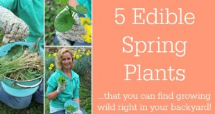 Edible Spring Plants you can find growing wild in your backyard from Primally Inspired (foraging, wild food)