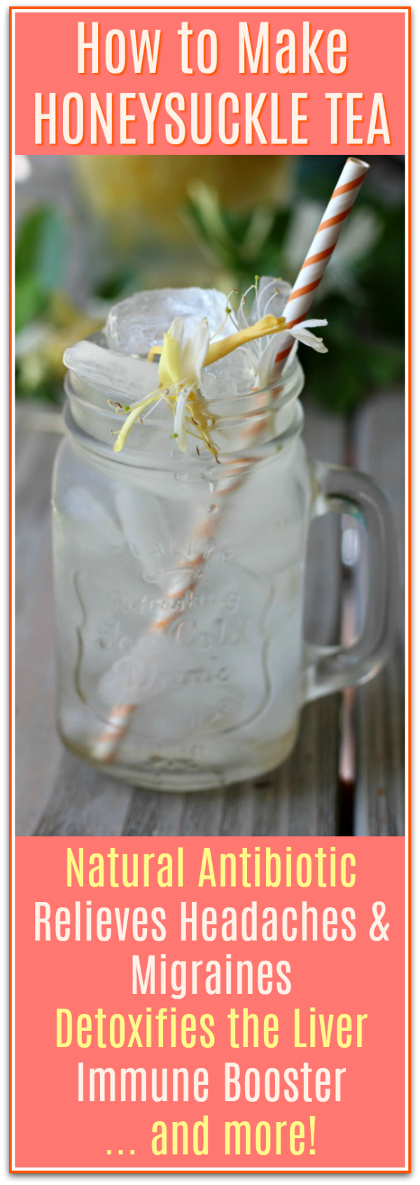 How to Make Honeysuckle Tea and health benefits of honeysuckle