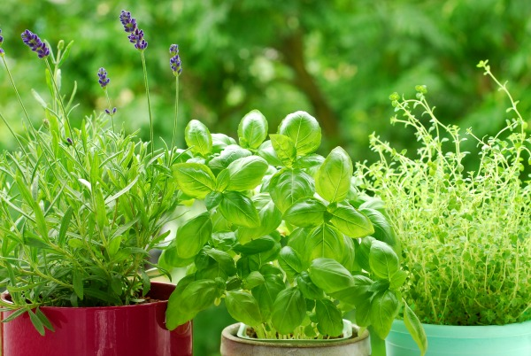 Best Herbs for babies and kids & how to use them