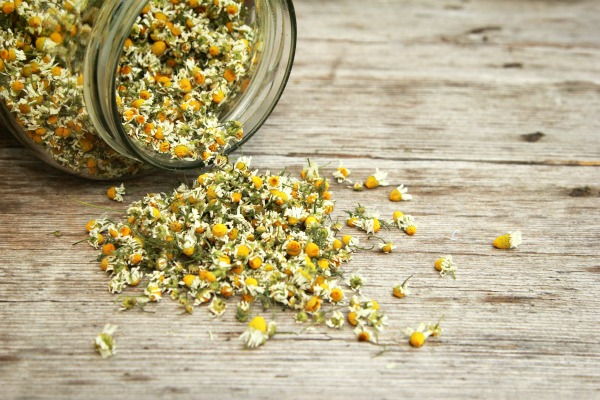 Chamomile is the best herb for babies and kids